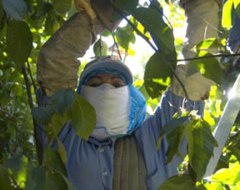 Migrant indigenous farmworker from Mexico. ©1999 David Bacon
